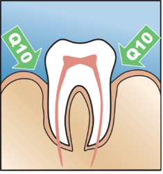 Illustration of a tooth and gingival pockets wherein Q10 penetrates